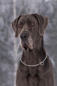 2019 Doggimainen Satasalamaa