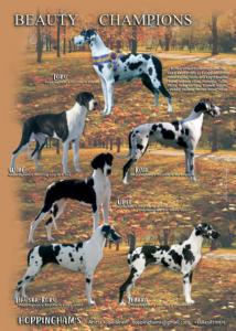4 19 hoppinghams sivu2